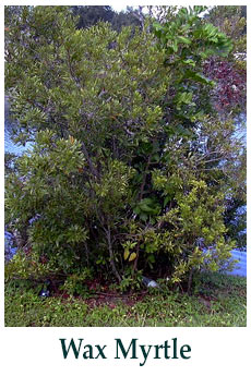 Florida Friendly Plants